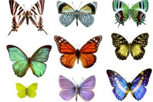 mulit colored butterflies